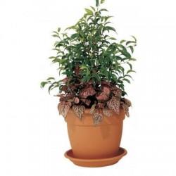 Pots de fleurs en résine Petra diam.39xH.31cm 19L brique